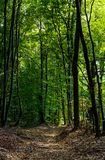 Road through forest covered with weathered foliage. Beautiful nature scenery, lovely place for a walk or trail running Royalty Free Stock Image