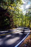 Road through a forest Stock Image