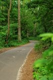 Road in a forest Royalty Free Stock Photo