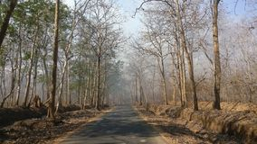 A road through the forest of Dandeli. A tarmac road through the forest of Dandeli during fall season stock photo