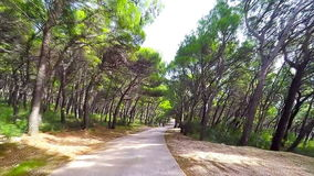 Road in forest - dashcam view stock video footage