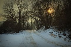 Road in the forest at dawn Royalty Free Stock Images
