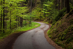 The road in the forest Royalty Free Stock Images