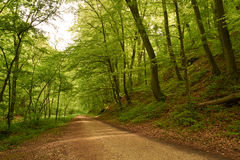 Road forest Stock Photo