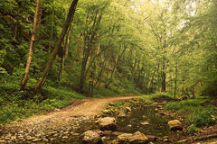 Road forest Royalty Free Stock Photography