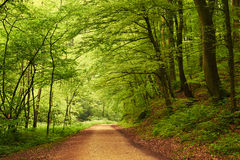 Road forest Royalty Free Stock Images
