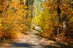 Road in the forest Royalty Free Stock Photography