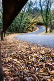 Road in the forest with double curve Stock Photography