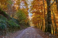 Road through forest in the fall. Dirt road through vibrant autumnal landscape Royalty Free Stock Images