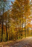 Road through forest in fall foliage. beautiful sun. Ny background. nice place for a walk stock photo