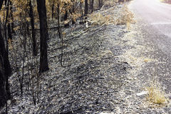Road and Forest fires was extinguished. Royalty Free Stock Images