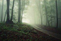 Road through a forest with fog. A road through a forest with fog Royalty Free Stock Image