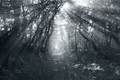 Road through forest with fog Stock Photos