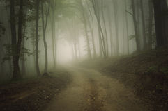 Road through a forest with fog in autumn Royalty Free Stock Images