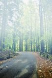 Road into the forest Stock Photography