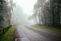 Road through forest with fog and misty Royalty Free Stock Photo