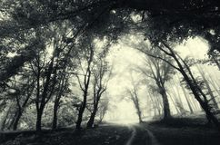 Road through forest with fog. Mysterious dark haunted Halloween scene. Road passing through mysterious dark haunted forest with fog on Halloween royalty free stock photos