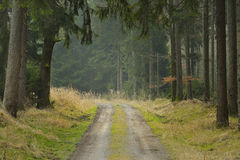 Road in forest Royalty Free Stock Photography