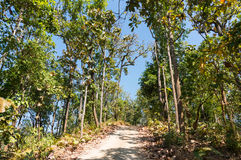 Road in forest has sun shade trees. Royalty Free Stock Photography