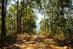 Road in forest has sun shade trees.  Stock Photography