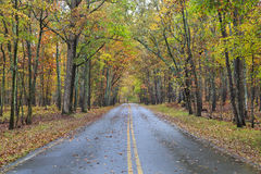 Road in a Forest. Road in Kings Mountain State Park in the fall, Blacksburg, South Carolina royalty free stock photography