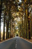 Road in the forest La Esperanza. At sunny day Royalty Free Stock Images