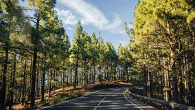 Road in the forest La Esperanza. And trees Royalty Free Stock Photography