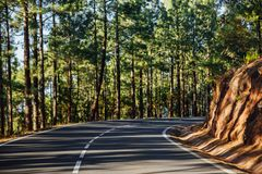 Road in the forest La Esperanza Stock Image