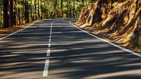 Road in the forest La Esperanza. With trees shadows Stock Images
