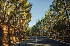 Road in the forest La Esperanza. With trees shadows Royalty Free Stock Image