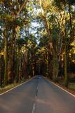 Road in the forest La Esperanza. And trees Stock Photos