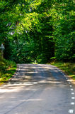 Road in a forest Royalty Free Stock Images