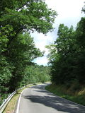 A road through forest. Lonely road, surrounded by forest Royalty Free Stock Photos