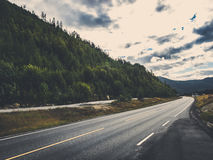 Road with forest in matte toning royalty free stock photography