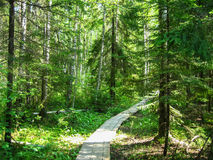 Road in the forest. Road in the middle of forest Stock Images