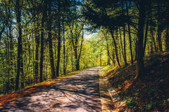 Road through a forest at Monticello, Virginia. Stock Photography