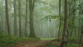 Road in forest. In the morning mist