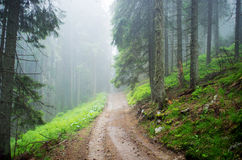 Road through forest mountain Stock Image
