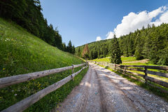 Road through forest in mountains Stock Photo