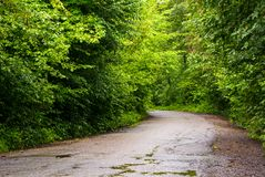 Road through the forest in mountains. Asphalt road through the green forest in mountains at sunrise Royalty Free Stock Images