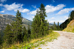 Road through  forest mountains Stock Image
