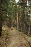 Road in the forest. Narrow road in the Crimean forest stock photo