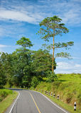 Road in forest natianal park. Royalty Free Stock Photos