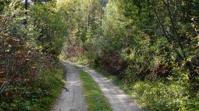 Road forest nature Pass Slyudyanka Khamar-Daban Royalty Free Stock Image