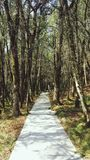 Road in the Forest, Nature Way Royalty Free Stock Image