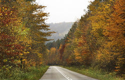 Road and forest near Leluchow. Poland.  Stock Photos