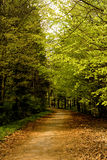Road in forest, Niedzica, Poland Royalty Free Stock Images