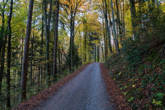 A road through the forest with orange leaves in fall. A road leading through the forest. The leaves have already turned yellow and the ground is covered with Royalty Free Stock Images