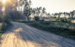 Road In The Forest. Orsha. Belarus. Summer Day Stock Photography