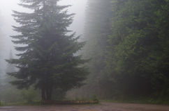 Road Through Forest. Pacific Northwest forest road surrounded by pine trees in a cool fog near Mt. Rainier,Washington Stock Photos